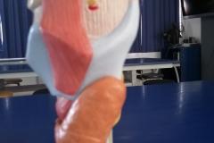 laringe1